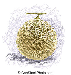 melon - closeup illustration of a fresh melon fruit.