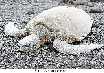 Tortoises On Ocean Coast