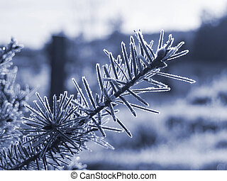 Morning Frost - A close up on a frost covered branch on an...
