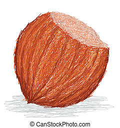 hazelnut - closeup illustration of whole hazelnut isolated...