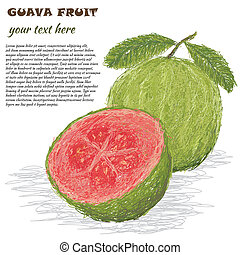 guava fruit - closeup illustration of fresh guava fruit...