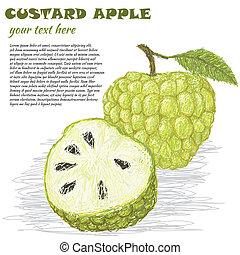 custard-apple - closeup illustration of fresh custard apple...