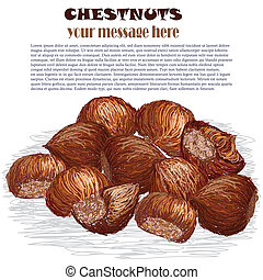 chestnuts - closeup illustration of group of chestnuts...