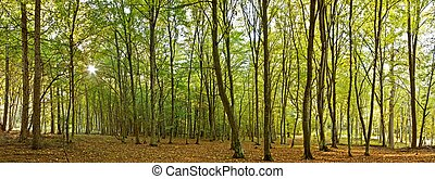 Panoramic image from a forest