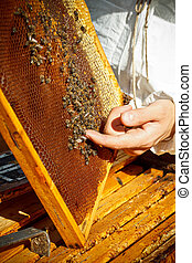 Apiarist is working in his apiary.