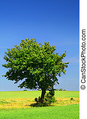 green grass field and a lonely tree, cloudless sky in...
