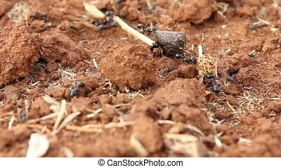 Working ants carrying heavy loads