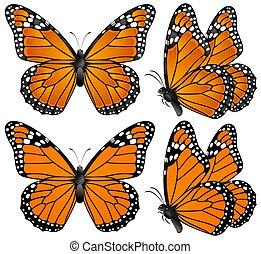 Orange butterfly - illustration of four orange butterflies...