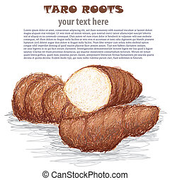 taro roots - closeup illustration of group of taro roots...