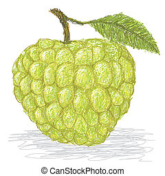 sugar-apple - closeup illustration of fresh custard apple...
