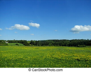 Summer Field of Green - A sunny green field in summer with...