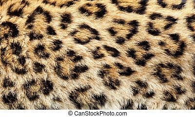 verdadero, Leopardo, piel, textura, Plano de fondo
