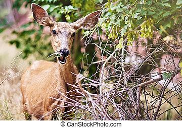 Portrait of eating deer