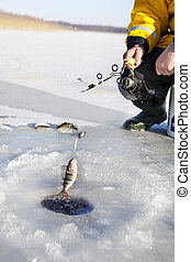 Ice Fishing - man ice fishing for the perch fish