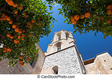 Mandarin orange tree near cathedral