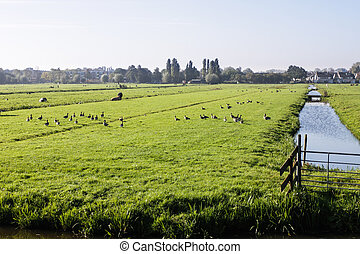 Farm field in Holland near canal