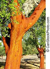 Cork Trees Stripped