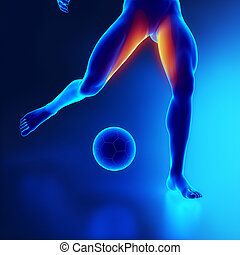 Strained thigh muscle concept in x-ray