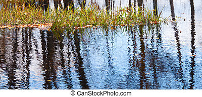 Reflections in Looking Glass River - Reflections of black...