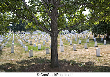 Shady spot - Graves at Arlington National Cemetery that are...