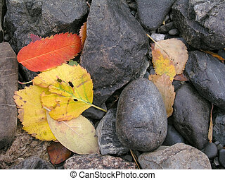Colorful Autumn Leaves  - Colorful leaves in the mounatin