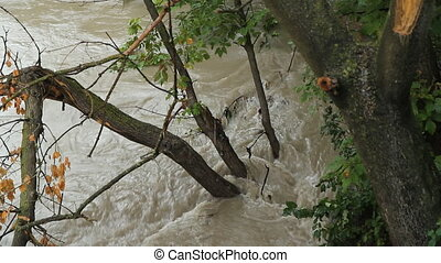 Flood river. Sunken trees. - High river and detail of tree...