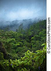 Rain Forest - Misty Rain Forest