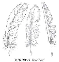 writing feathers - elegant writing feathers on white