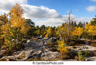 Forest of Fontainebleau - Beautiful autumn landscape in the...