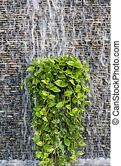 Stream of water on a brick wall with green leaf