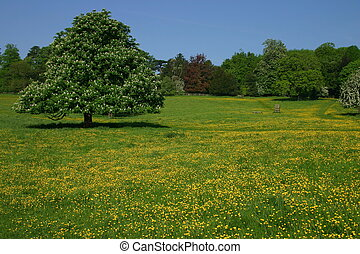 Buttercup Meadow - An English meadow at Hughenden Park...