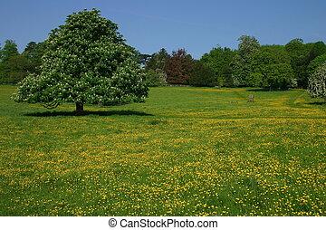 Buttercup Meadow - An English meadow at Hughenden Park...