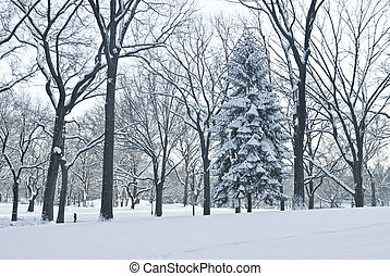 Winter Scene Central Park - A blue toned Winter view of...