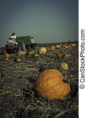 Pumpkins on a Fiels - Pumpkins on a field under a great...