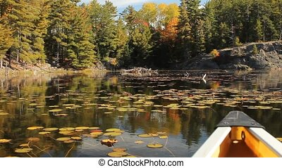 Beaver lodge seen from a canoe - Beaver lodge in lake and...