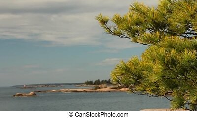 Wind moving pine needles, with view of Georgian Bay behind....