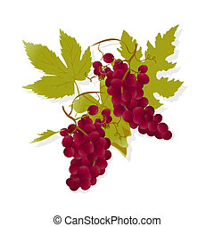 Red wine grapes - Realistic red grapes and leafs, gradient...