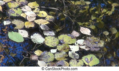 autumn leaf and pond water