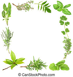 Organic Herbs - Organic herb border of bay leaves, lavender,...
