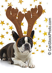 funny dog at christmas with antlers
