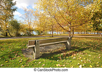 Trees full of fall colors in a field by a lake with a bench by the walking path