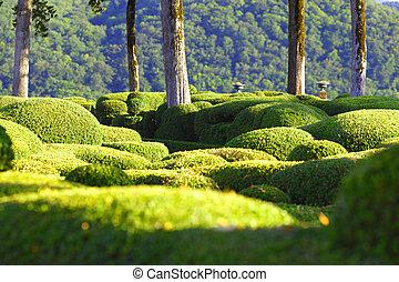 marqueyssac garden