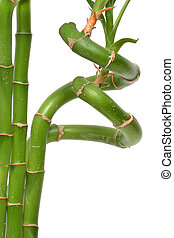 Bamboo Plant - bamboo plant white background