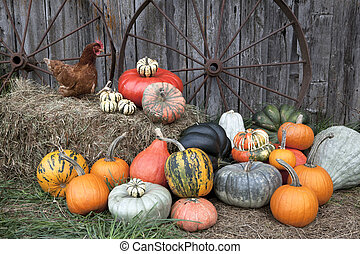 Pumpkin harvest at the farm. - a colorful variety of...