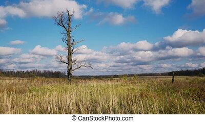 Bare tree  - Bare tree, autumnal timelapse