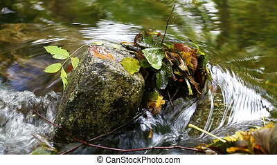 Autumn leaves in the river - piled on a stone