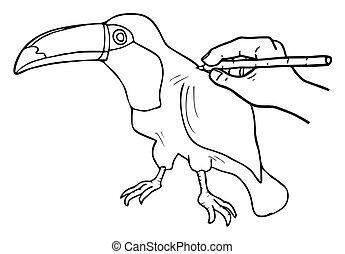 Tucan drawing - Creative design of tucan drawing