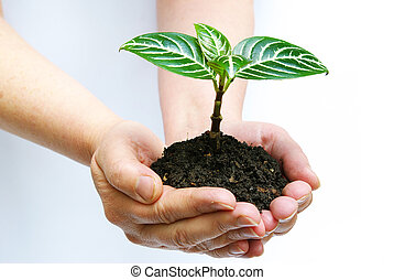 plant in hands - plant in the hands on white background