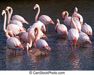 Pink flamingos in Camargue National Park, France. (unesco...