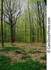 het bos - bomen in het bos